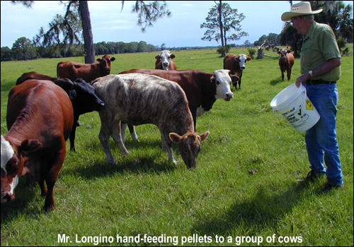 Buster T. Longino feeding cows
